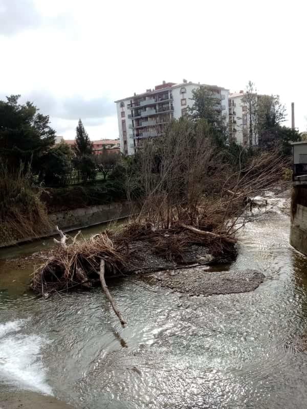 Grossi rami caduti nel fiume tra Salerno e Pontecagnano: l'appello