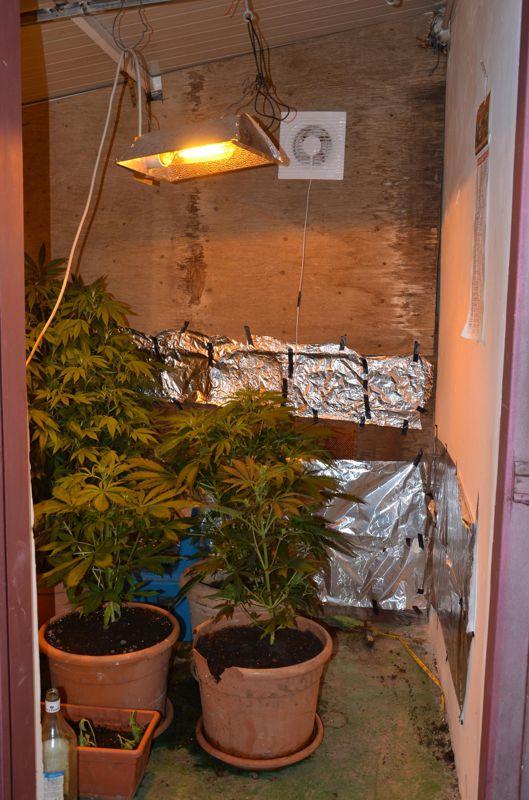 Giffoni, sorpreso in possesso di 15 piantine di marijuana: arrestato