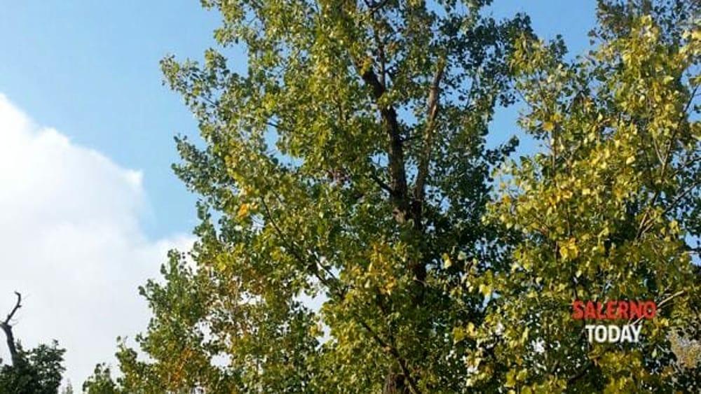 """Parte """"Castel San Giorgio Green"""": sindaco e consiglieri donano 200 alberi al territorio"""