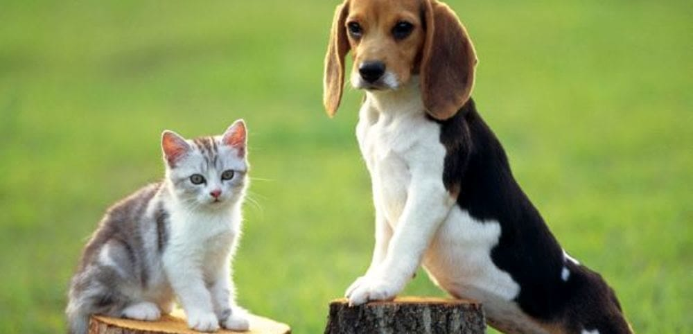 Microchippatura dei cani: al via i raduni a Pellezzano, il calendario