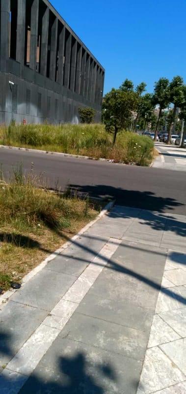 Erbacce e insetti: urge una ripulitura nei pressi della Cittadella