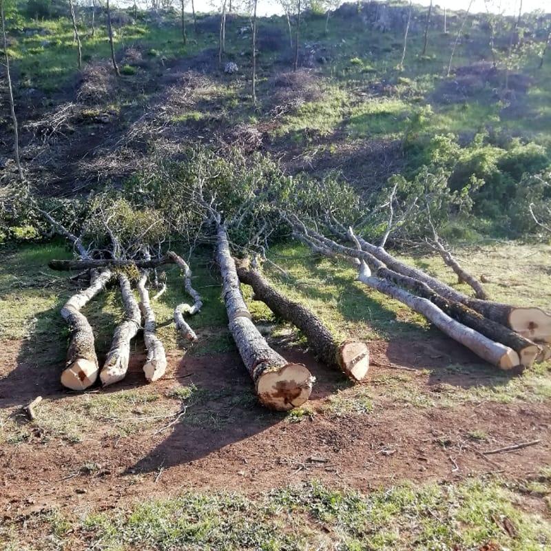 Tagli abusivo di piante nel bosco a Montesano: scattano multe e denunce