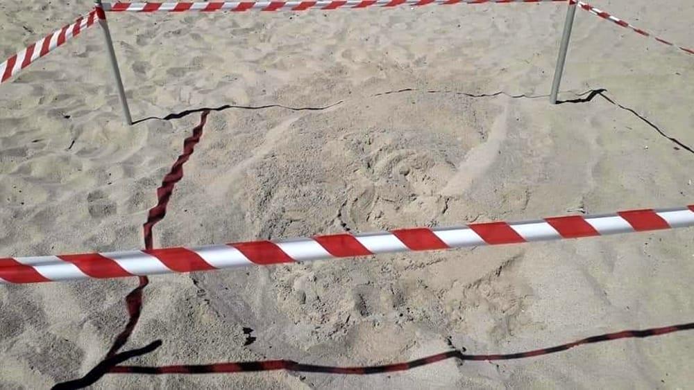 Caretta Caretta: è ad Eboli il terzo nido in Campania, la curiosità