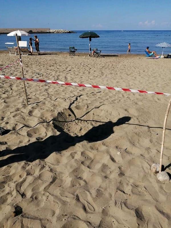 Caretta Caretta: spunta il 12° nido a Casal Velino, estate da record