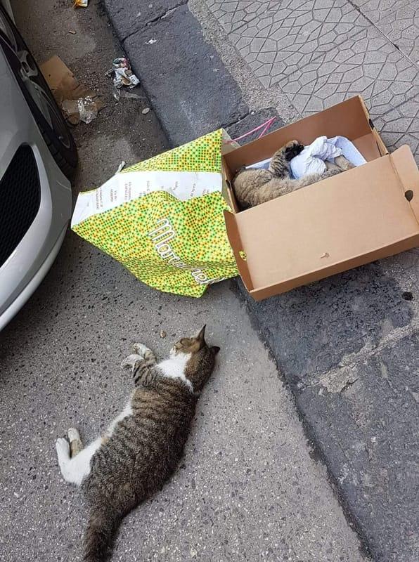 Battipaglia, continua la strage dei gatti: è caccia al killer