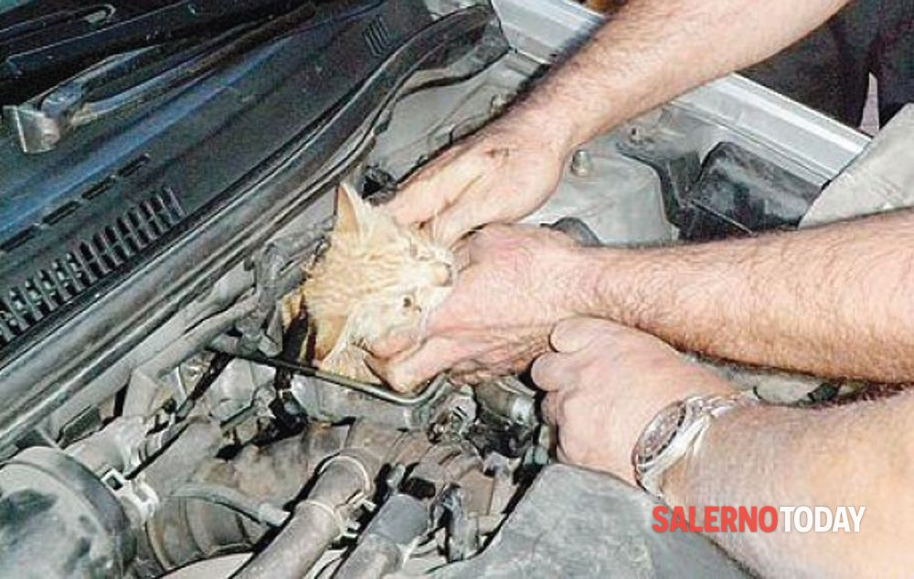 Salerno, gattino nel motore di un'auto: salvato dai vigili del fuoco