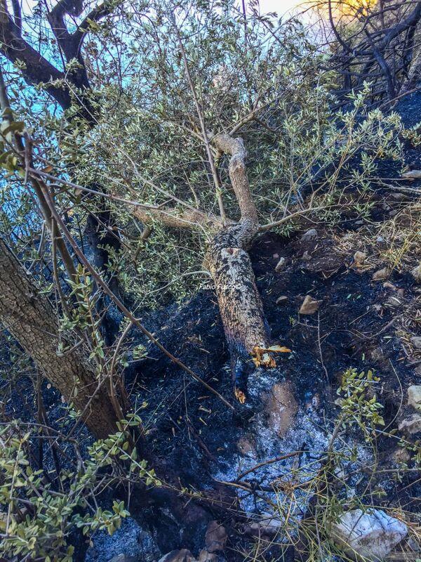 Costiera divisa in due, smottamenti dopo l'incendio: chiusa la strada a Positano