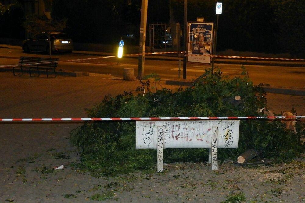 Grosso ramo si spezza e cade in strada a Torrione: tanta paura