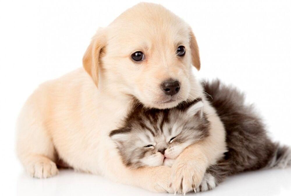 Come avere la nostra casa pulita, profumata e in ordine con gli animali domestici