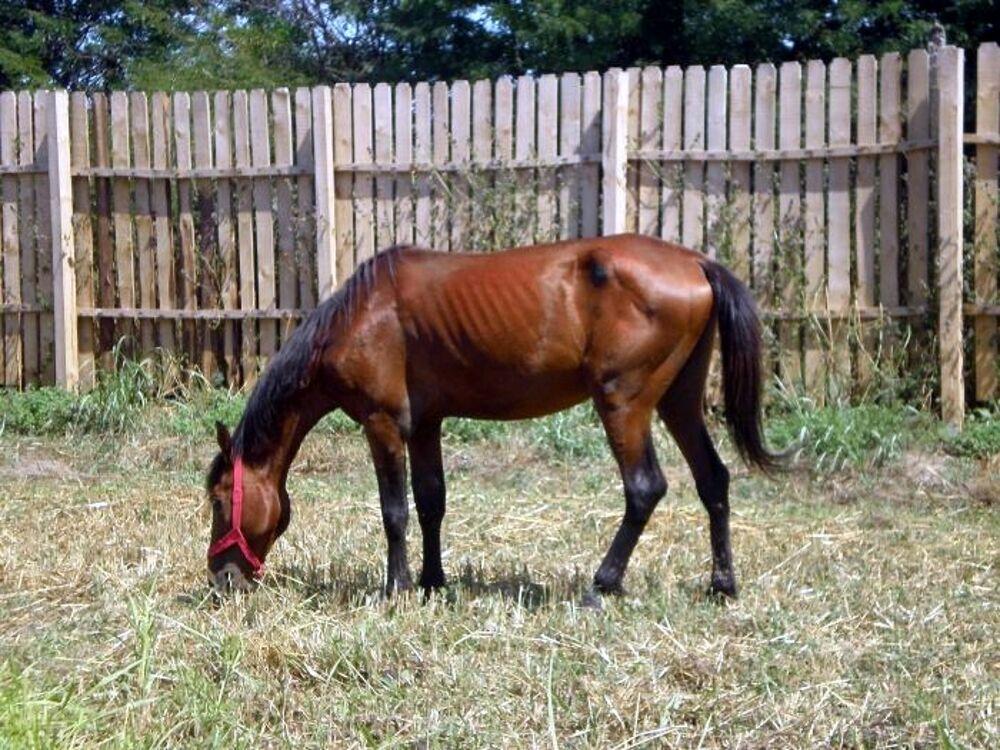 Pascolo abusivo e non autorizzato di cavalli, fioccano denunce a Sassano