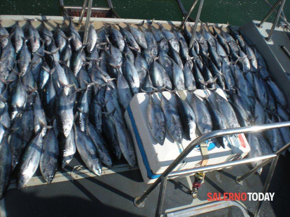 """Pesca illegale di tonno ad Agropoli, Legambiente: """"Più controlli"""""""