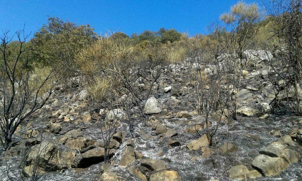 Spento l'incendio sulle montagne di Polla: ingenti i danni alla vegetazione