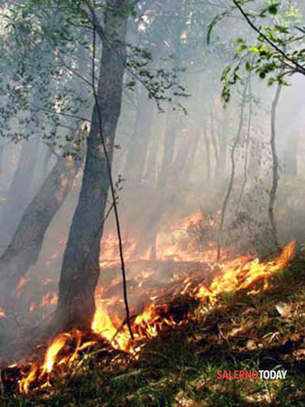 Incendio tra Buccino e San Gregorio Magno: in cenere ettari di vegetazione