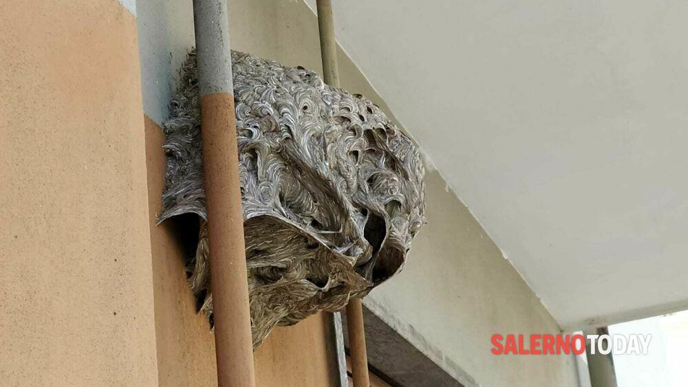 Nido di calabroni sul balcone del Mipaaf di Salerno: arrivano i pompieri