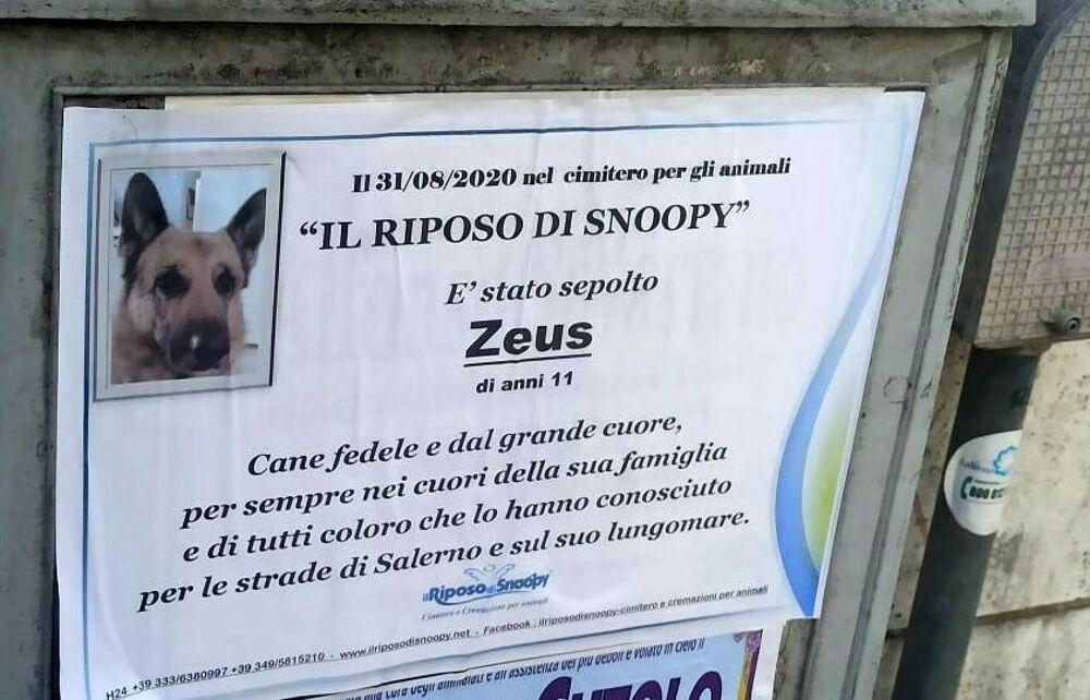 Manifesti funebri per Zeus, il cagnolone buono vissuto 11 anni