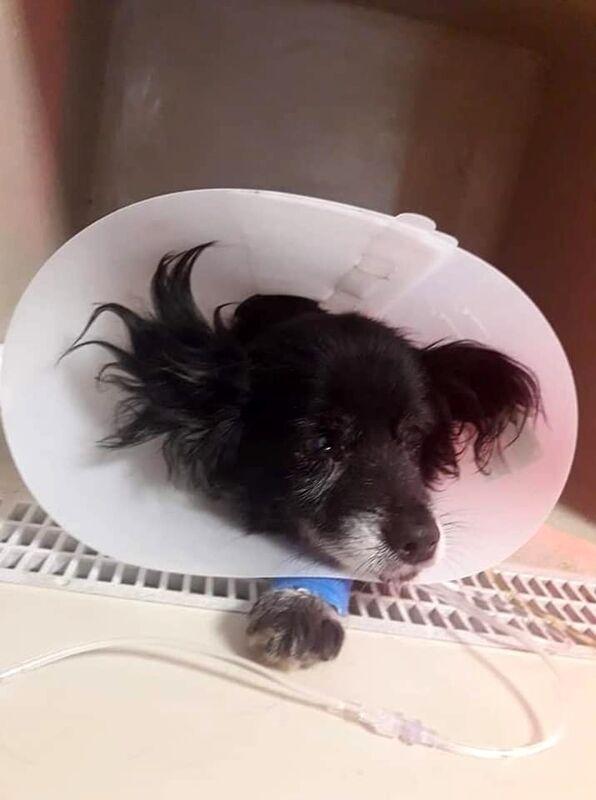 Azzannato da un branco di cani randagi: muore il piccolo Bobby a Cava