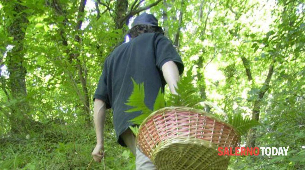 Si perde in montagna mentre cerca i funghi: salvato dai forestali ad Acerno