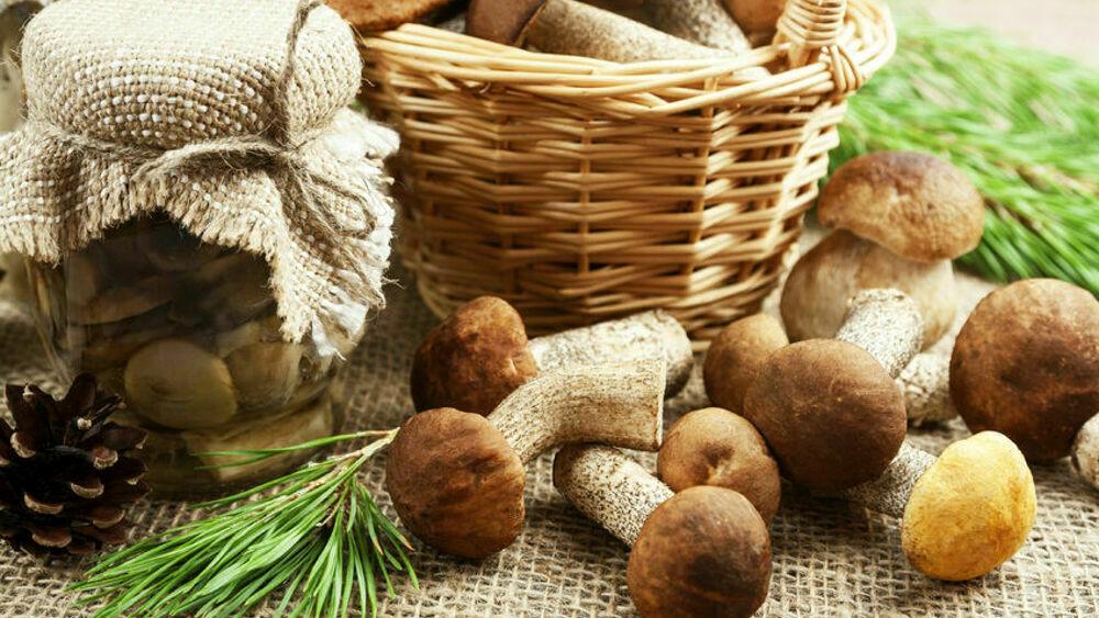 Funghi: proprietà, benefici, e i consigli per raccoglierli