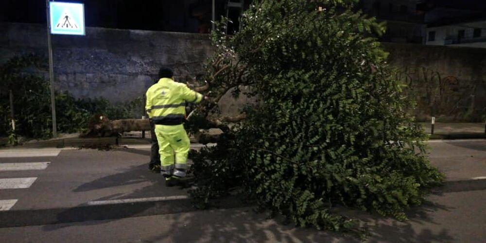 Raffiche di vento: alberi caduti nelle due Nocera e a Roccapiemonte