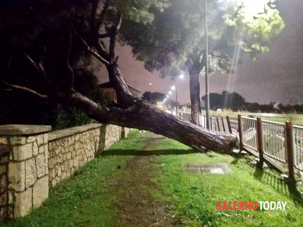 Paura a Bivio Pratole: un albero si abbatte sul muro del cimitero degli inglesi