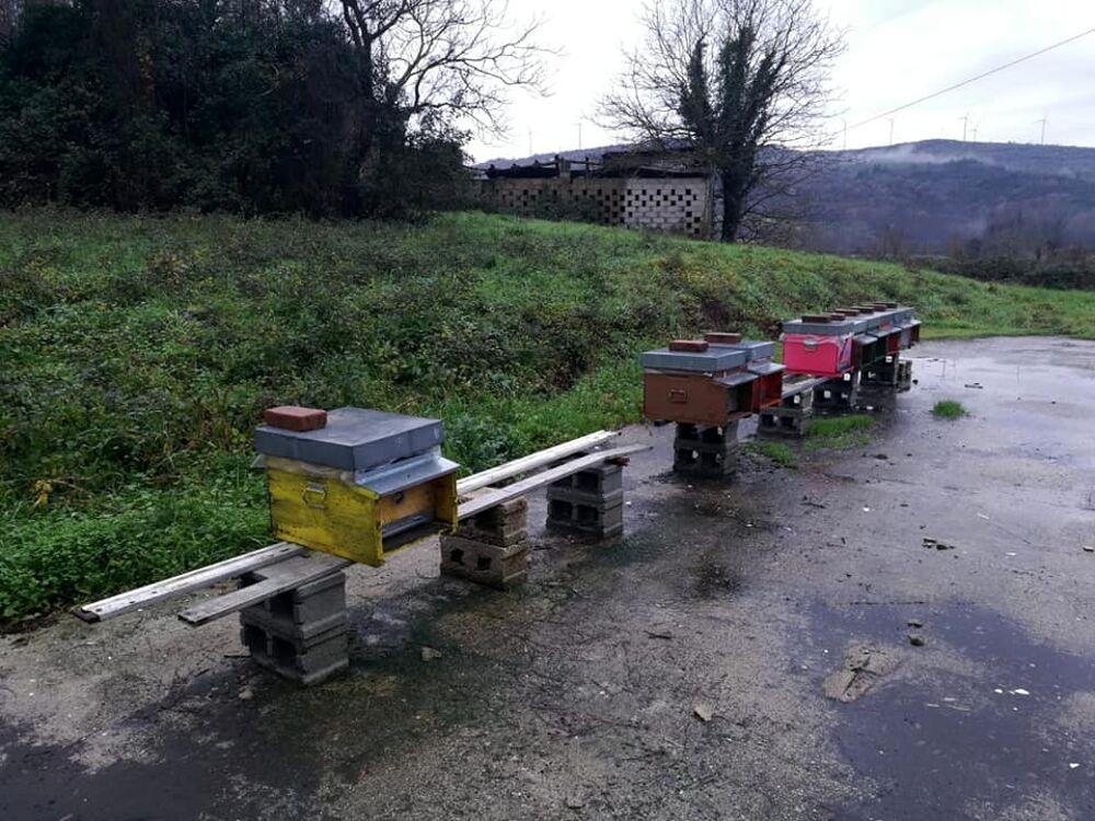 Rubati sette alveari a Sicignano: apicoltore offre ricompensa per chi li ritroverà