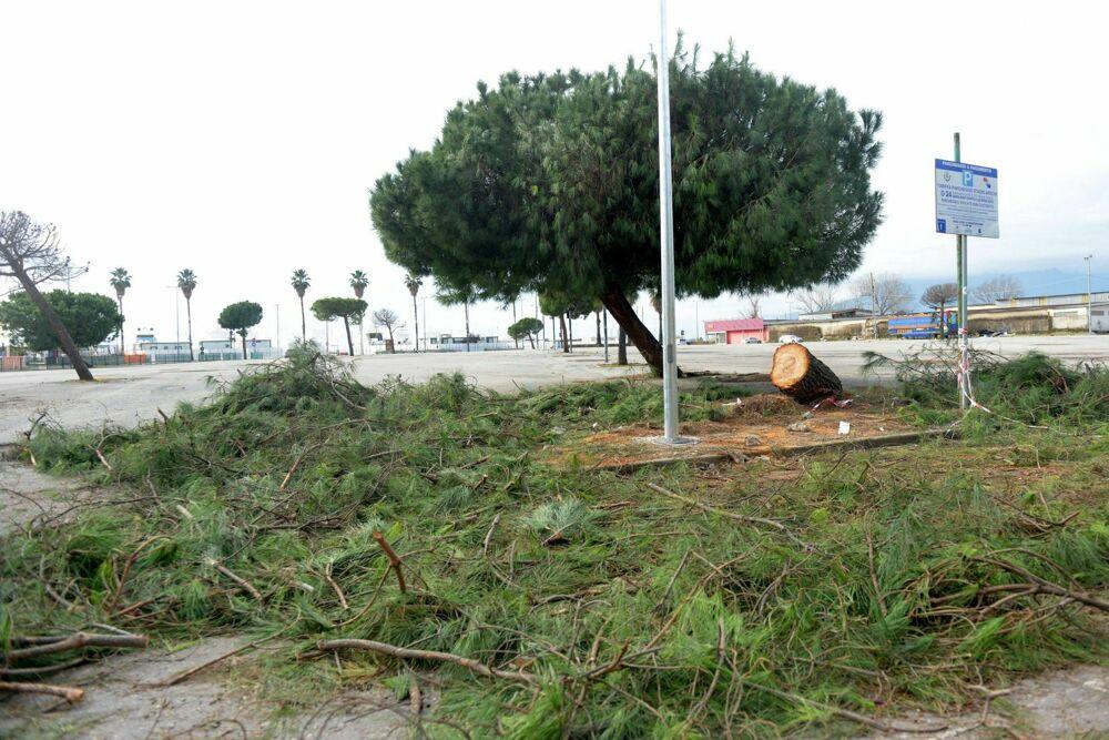 Manutenzione per alberi e aiuole: interventi del Comune di Salerno in zona Arechi