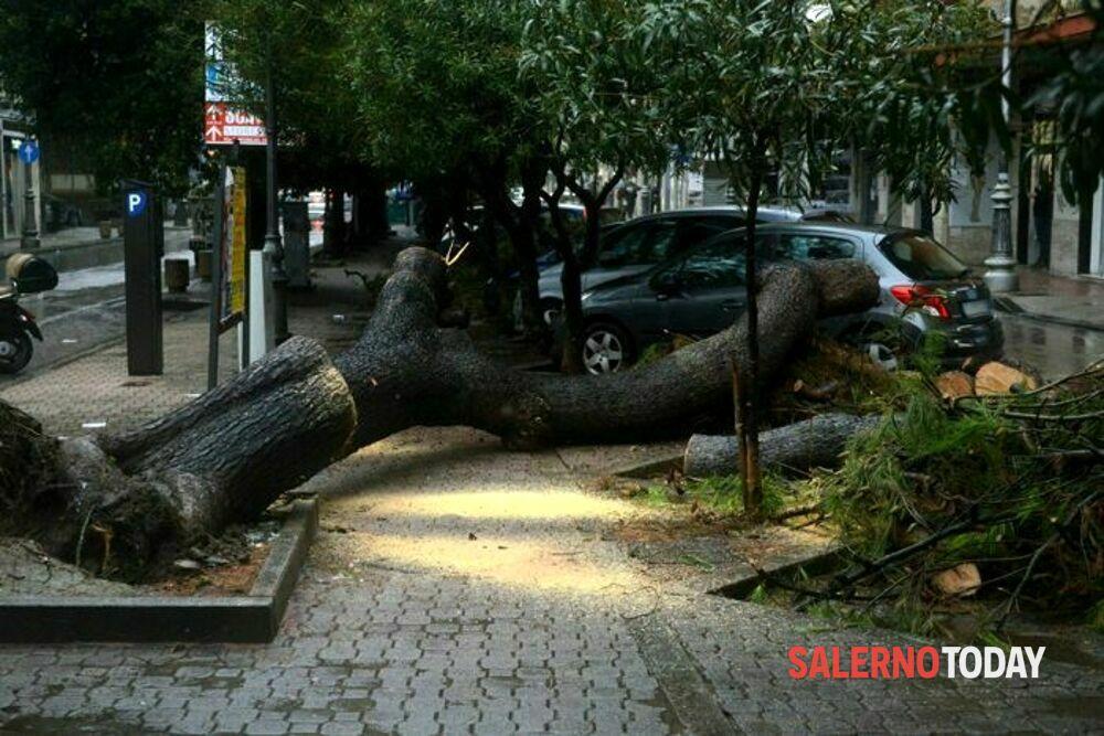 Cade un altro albero a Salerno, Cammarota convoca i dirigenti del Comune