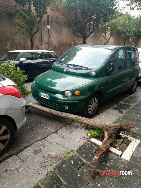 Raffiche di vento a Salerno, cade un albero in via Nizza: sfiorata un'auto