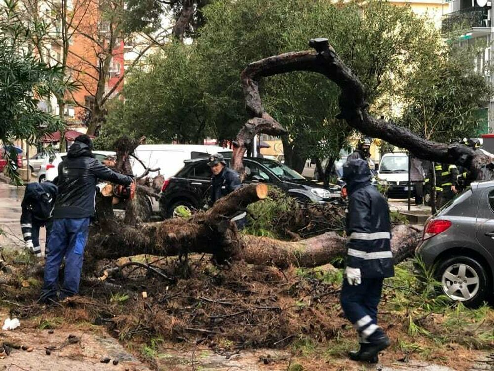 Maltempo e danni: cade un grosso arbusto a Torrione, l'ira dei consiglieri d'opposizione