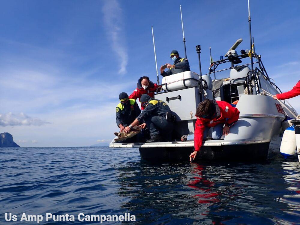 Costiera, tre tartarughe ritrovano la libertà al largo di Punta Campanella