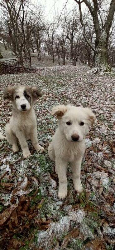 Trovano le cagnoline sparite, ma le lasciano alla nuova proprietaria: il cuore grande di due giovani di Acerno