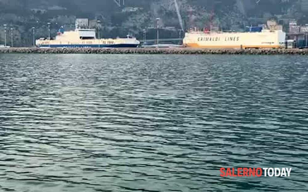 Un delfino nel porto di Salerno: il video di una lettrice