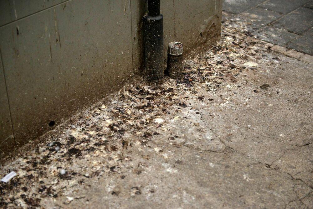 Escrementi di piccioni ovunque: la segnalazione a Torrione