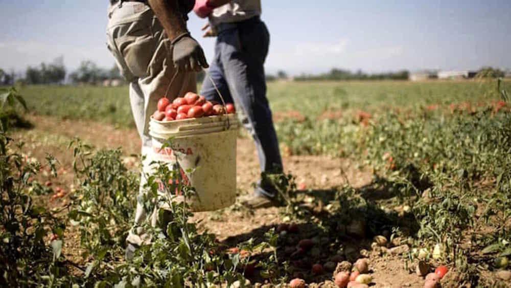 Lavoratori agricoli: presidi dinanzi alle Prefetture con Fai Cisl, Flai-Cgil e Uila Uil