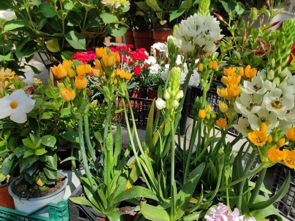 """Ritorna """"Salerno in flora"""": vendita di piante e fiori al Parco Pinocchio"""