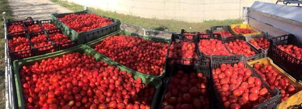 Lavoro nero nella Piana del Sele: denunciato il titolare di un'azienda agricola