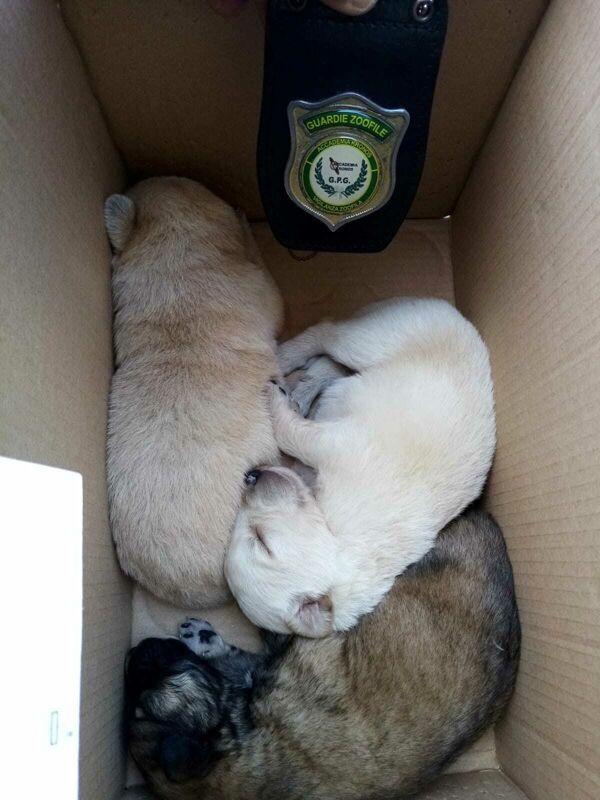 Cuccioli abbandonati in un sacco di bottiglie: l'intervento