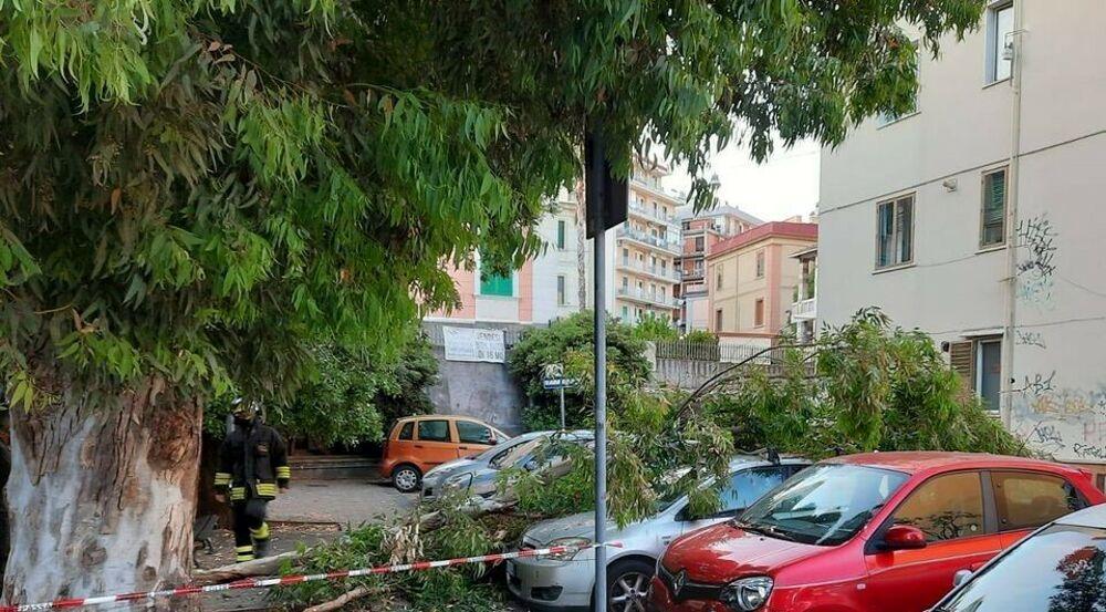 """Albero caduto in via Dalmazia, il Codacons: """"Si dimettano i responsabili del verde pubblico"""""""