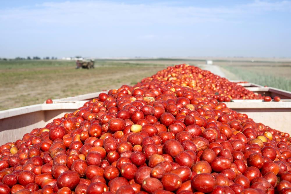 Tonnellate di pomodoro egiziano contaminato da pesticidi: maxi sequestro nell'Agro Nocerino