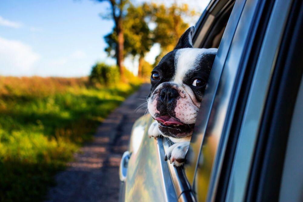 In viaggio con il tuo cane: ecco cosa devi sapere