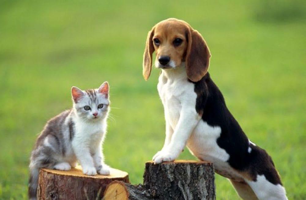Comune di Salerno: al via le candidature per il Garante degli animali