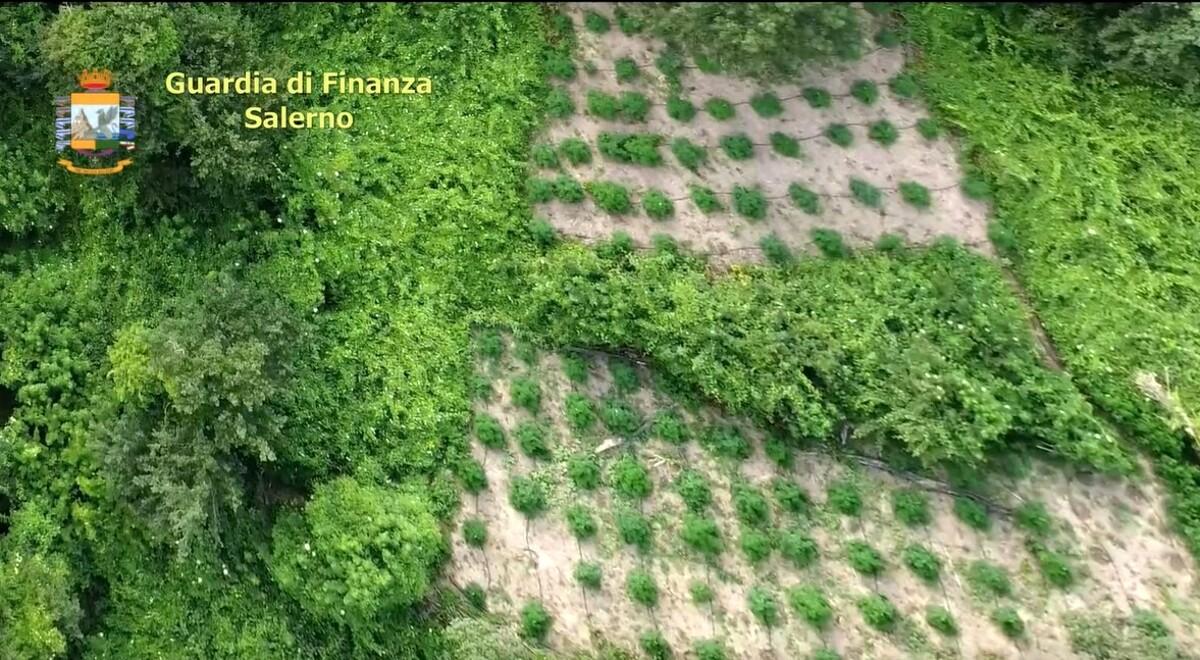 Droga nella Piana del Sele, la Finanza sequestra 470 piante di cannabis: tre arresti
