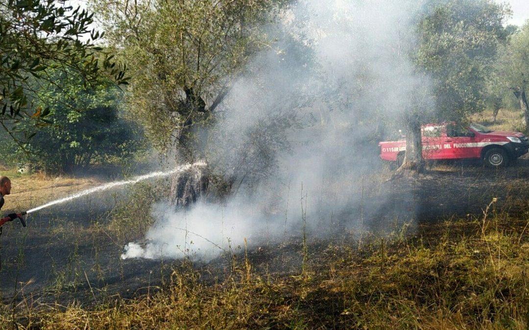 Fiamme ad Auletta: brucia un uliveto, corrono i vigili del fuoco