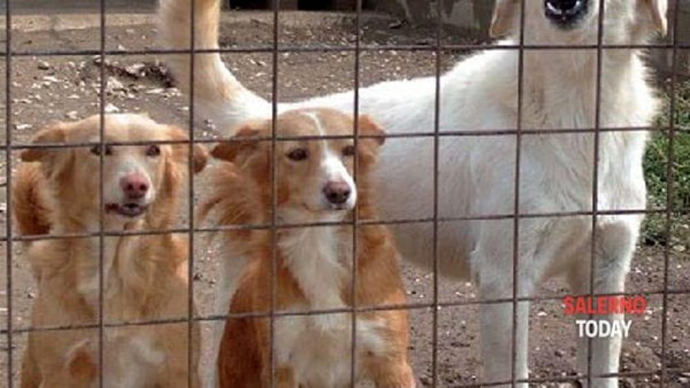 """""""No alla detenzione in gabbia"""": gli animalisti protestano a Salerno"""