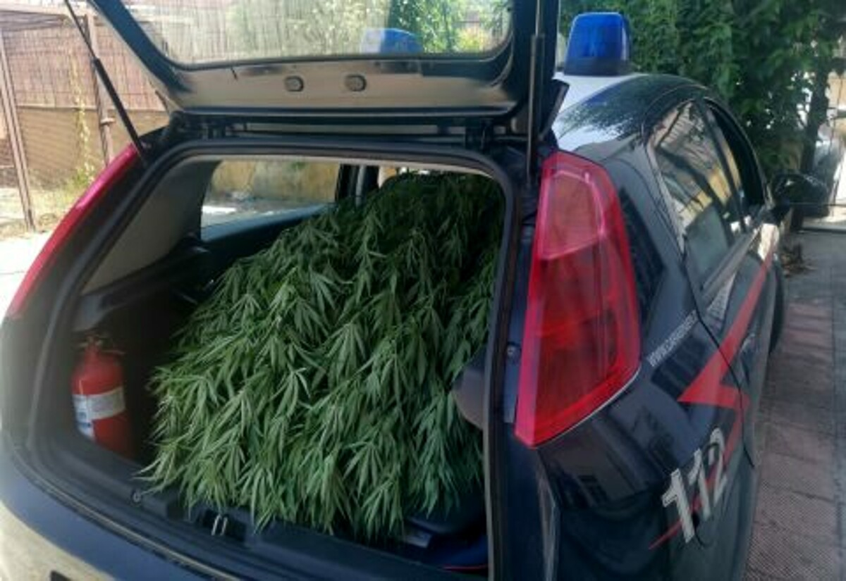 Albanella, sequestrati nove chili di marijuana: denunciate due persone
