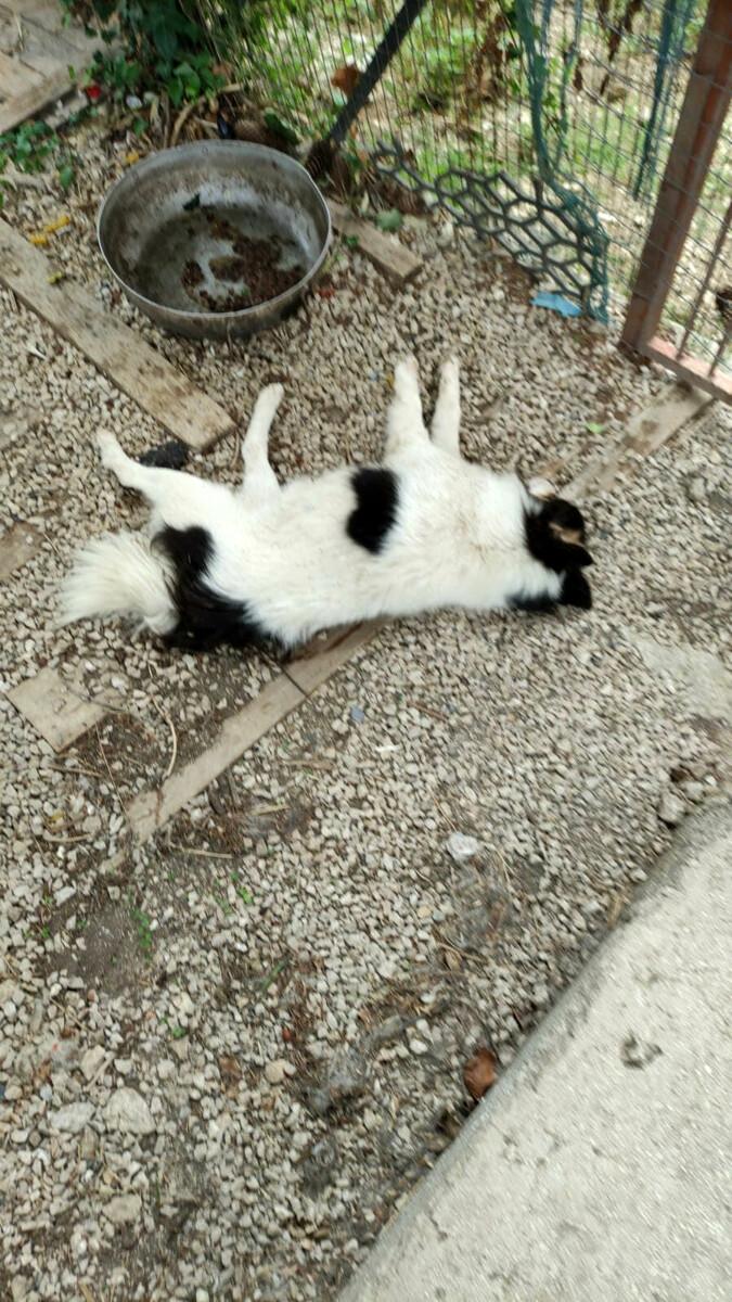 """Gatti avvelenati a Colliano, ora è emergenza: """"Come può chi sa, tacere?"""""""