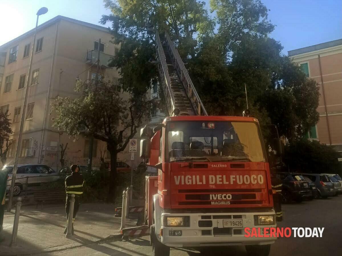 Alberi pericolanti in via Dalmazia: intervengono i vigili del fuoco